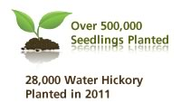 over 245,000 seedlings planted